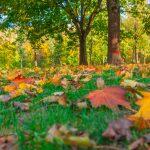 Wunderbare Herbstlandschaft