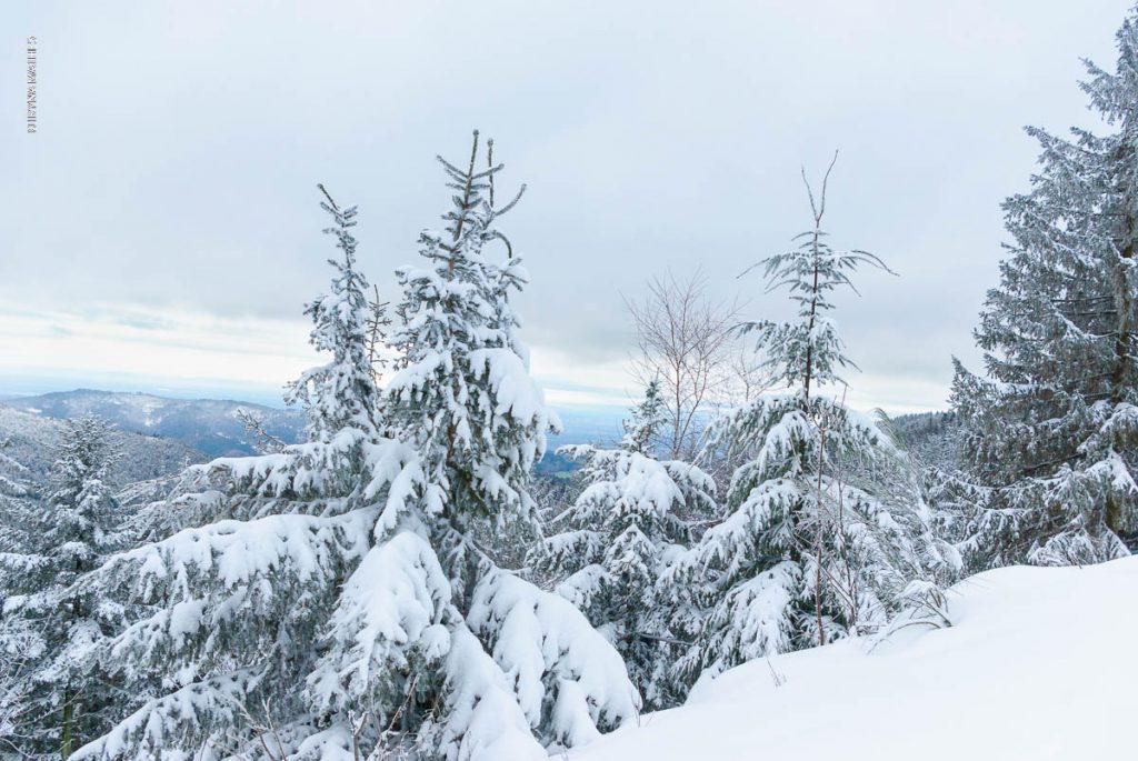 Winter Landschaft, Mummelsee