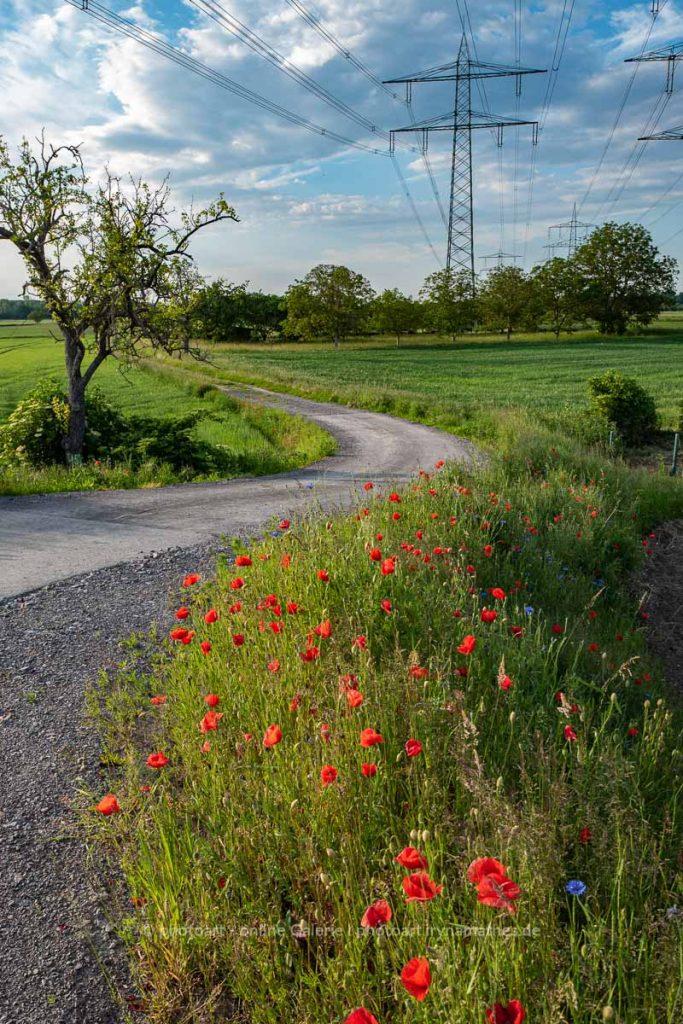 Landschaft. Mohnblumen am Straßenrand