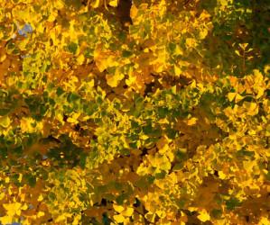 Herbst, Nebel, Farbe…