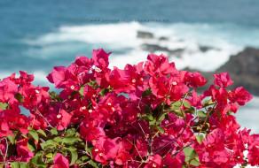 Insel Teneriffa, Foto Iryna Mathes