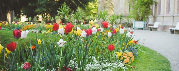 Frühling in Karlsruhe. Iryna Mathes Fotografie, Botanischer Garten