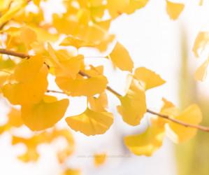 Herbst. Naturmotive von Iryna Mathes