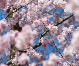 Frühling in Karlsruhe. Natur Fotografie