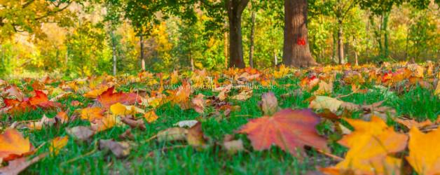 Baggersee Untergrombach-Bruchsal an einem Herbsttag. Deutschland, Europa Landschaft Fotografie