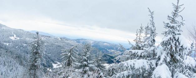 Winterlandschaft. Mummelsee 2020. Natur Fotografie